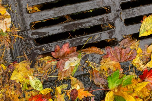 blocked outside drain clogged with leaves